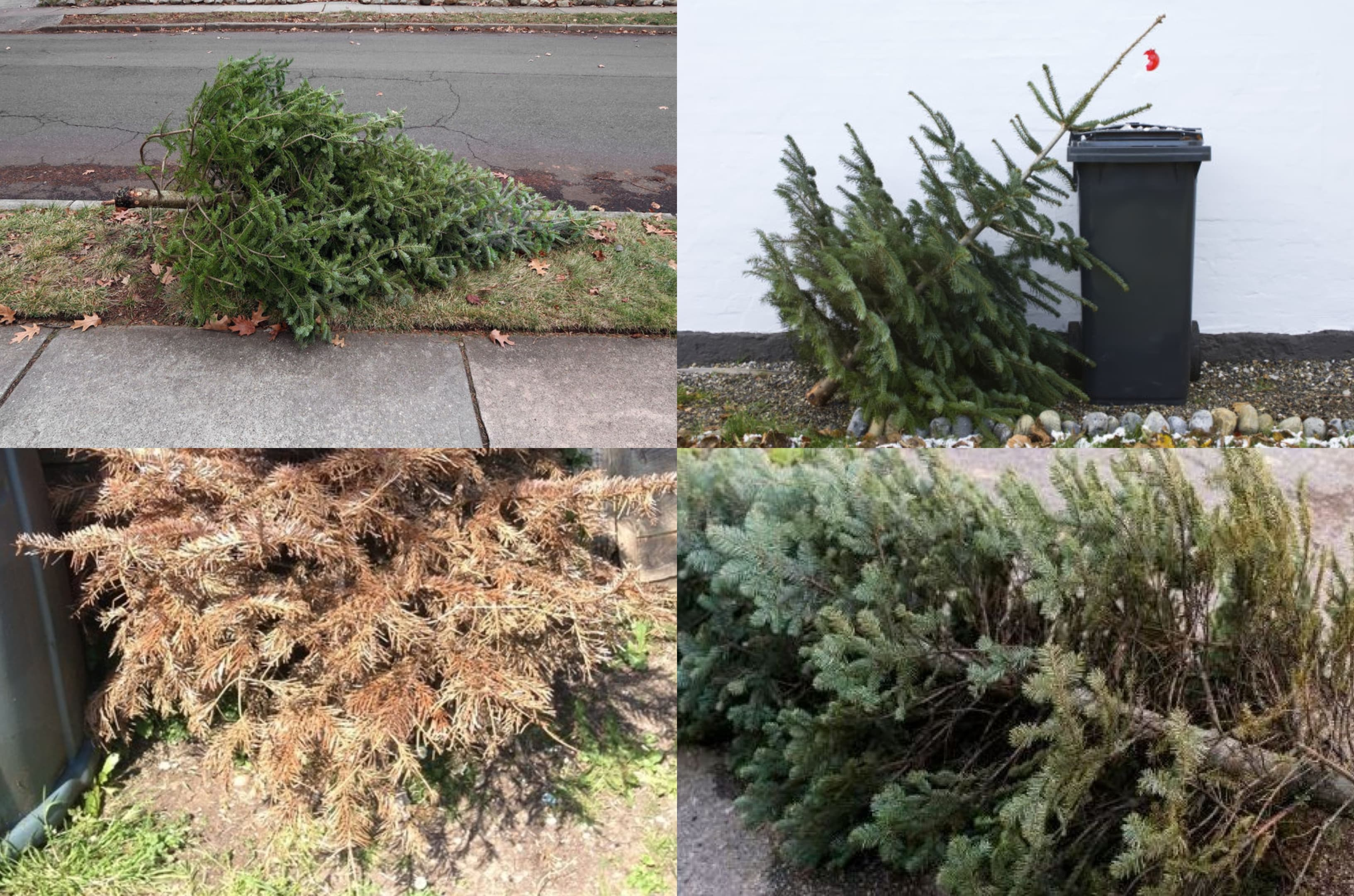 dead old christmas tree collage