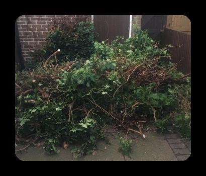 tree rubbish